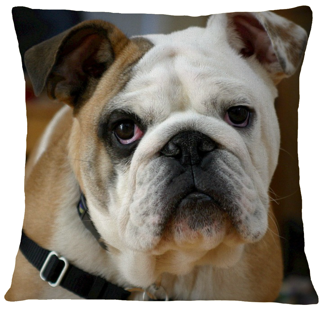 Bulldog Pillow Cover Dog Bulldog breeds, Dog breeds