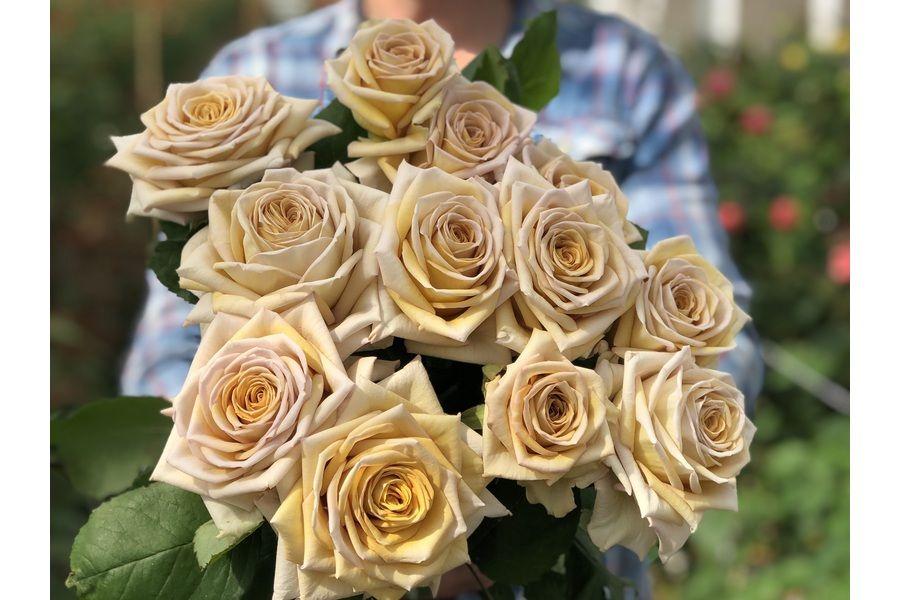 Roses Sassen B V Vip Roses Earth Colour Palette Rose Flower Company