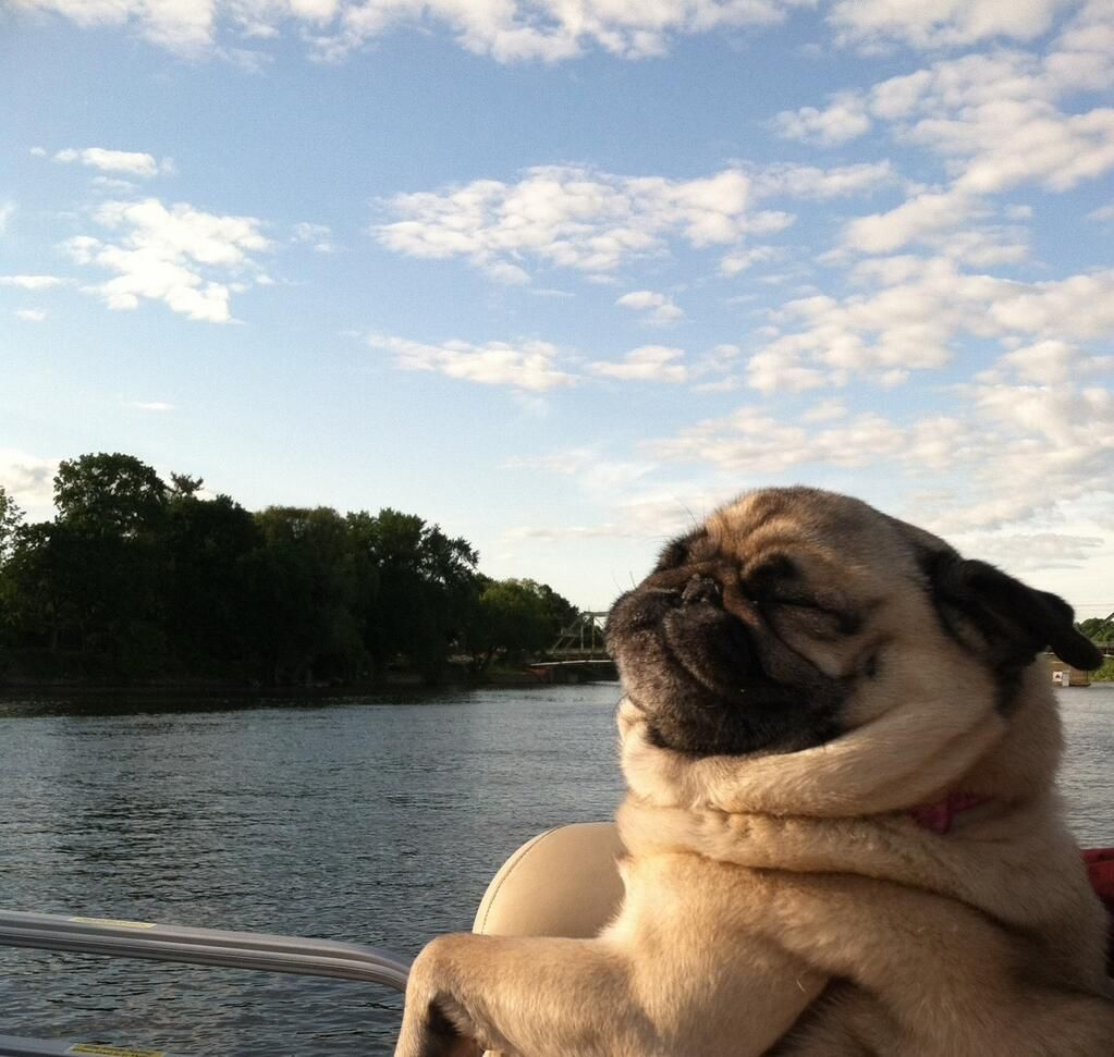 This Little Pug Is Living The Life Sun Shining Out O The Water