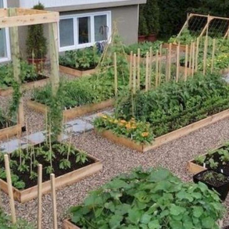 28+ The Chronicles of Garden Ideas Vegetable Layout ...