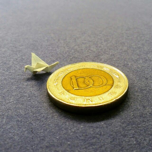 My little bird.Hungarian forint coin for scale :-)