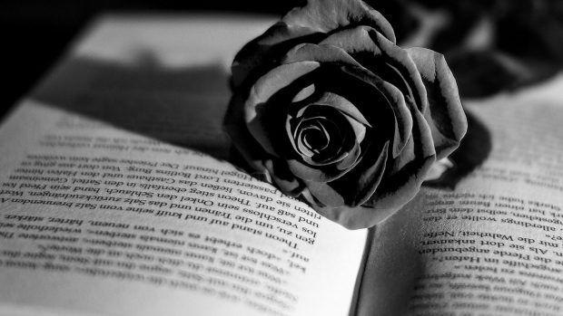 Black Flower Book Rose White Flowers As Desktop Background In 2020 Rose Flower Wallpaper Flower Wallpaper Rose Flower
