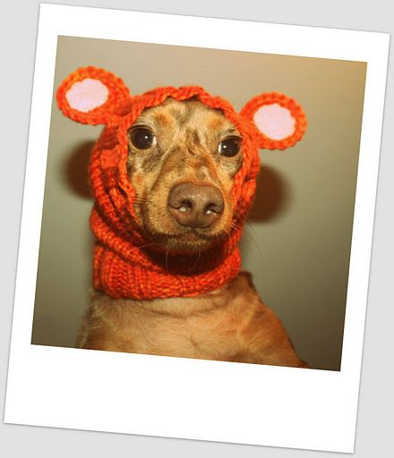 yep. need to make this for the dog. knitted humiliating dog headband  (poor dog! he's blushing)