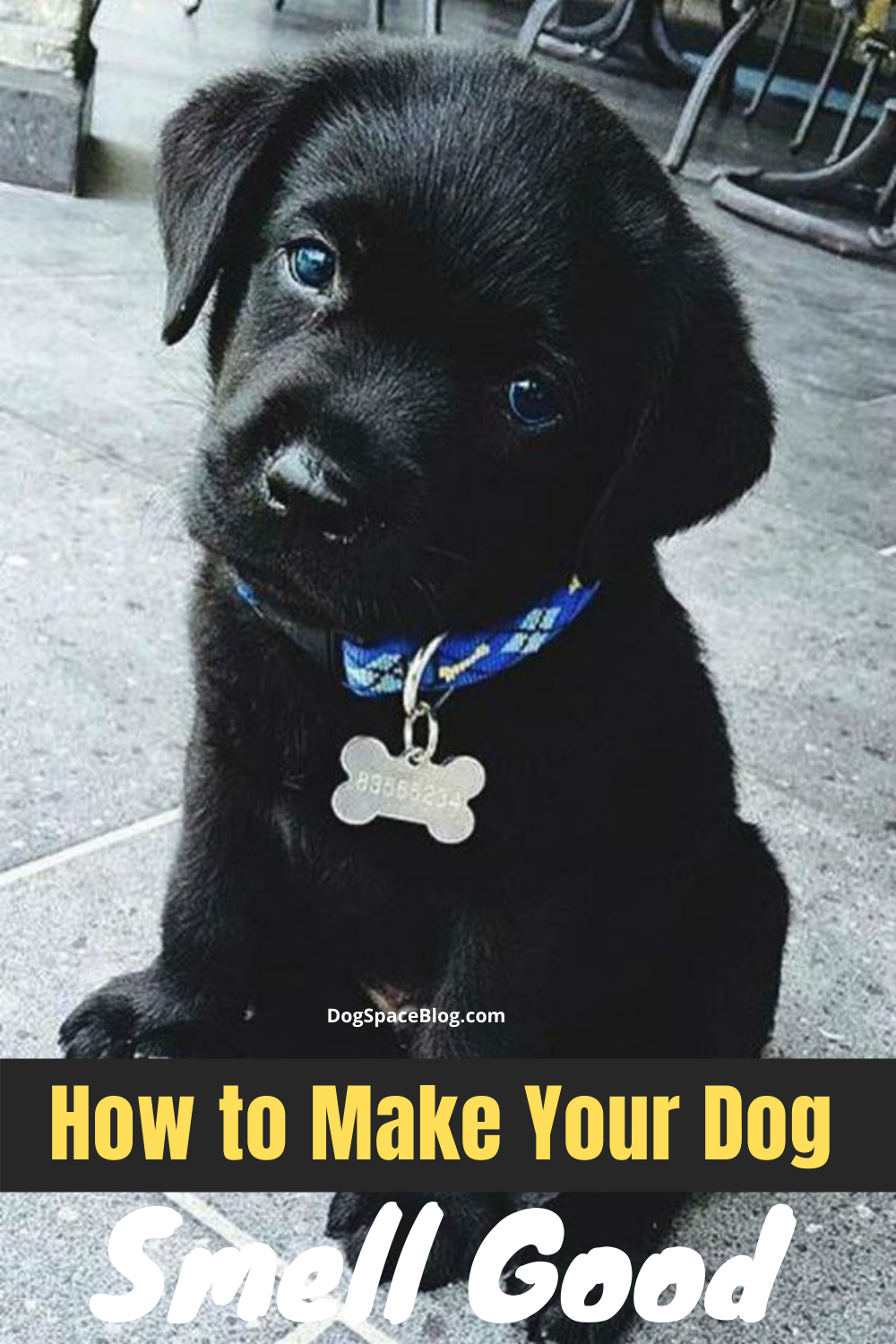 How To Make Your Dog Smell Good