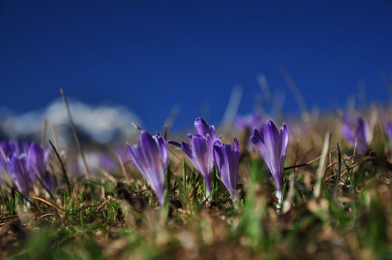 Colchici in Val Badia