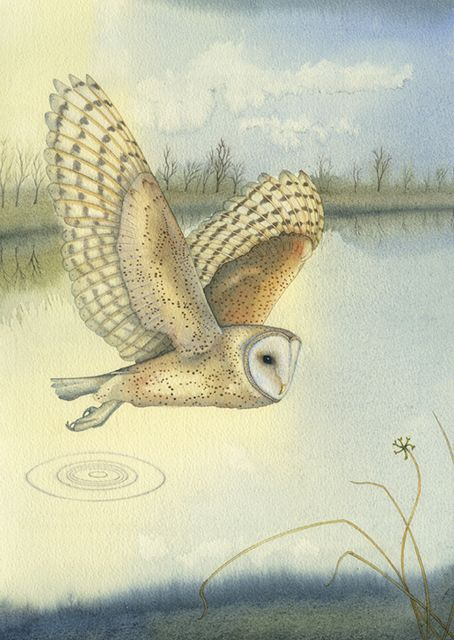 'Barn Owl Over The Water' By Kate Green.