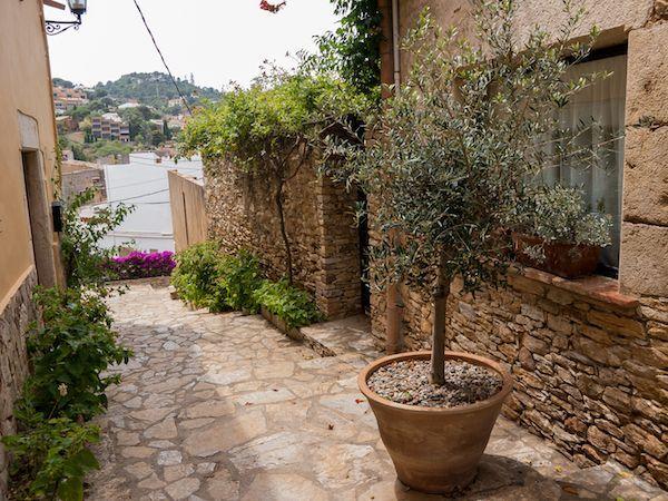 Einen Olivenbaum Umtopfen So Macht Ihr Es Richtig Olivenbaum Olivenbaum Pflege Mediterraner Garten