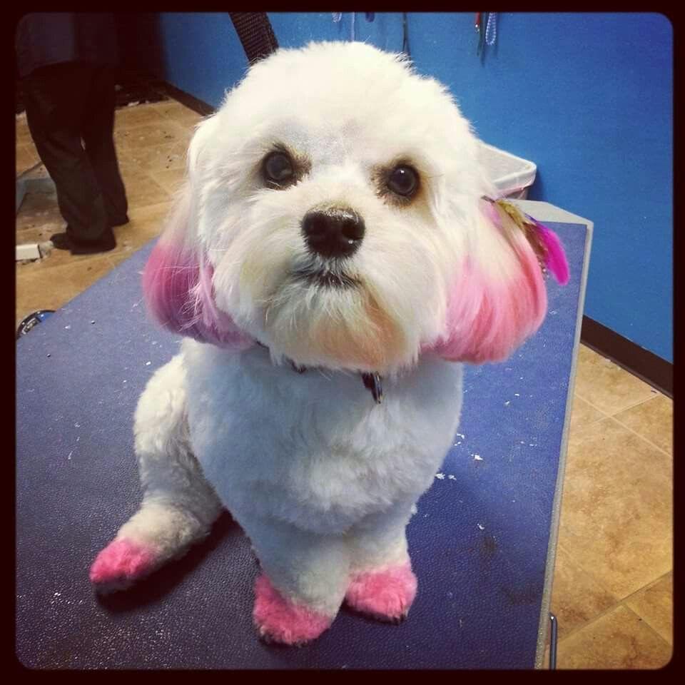 Castle Creek Pet Resort And Spa Pet Resort Pink Dog Dog Hair Dye