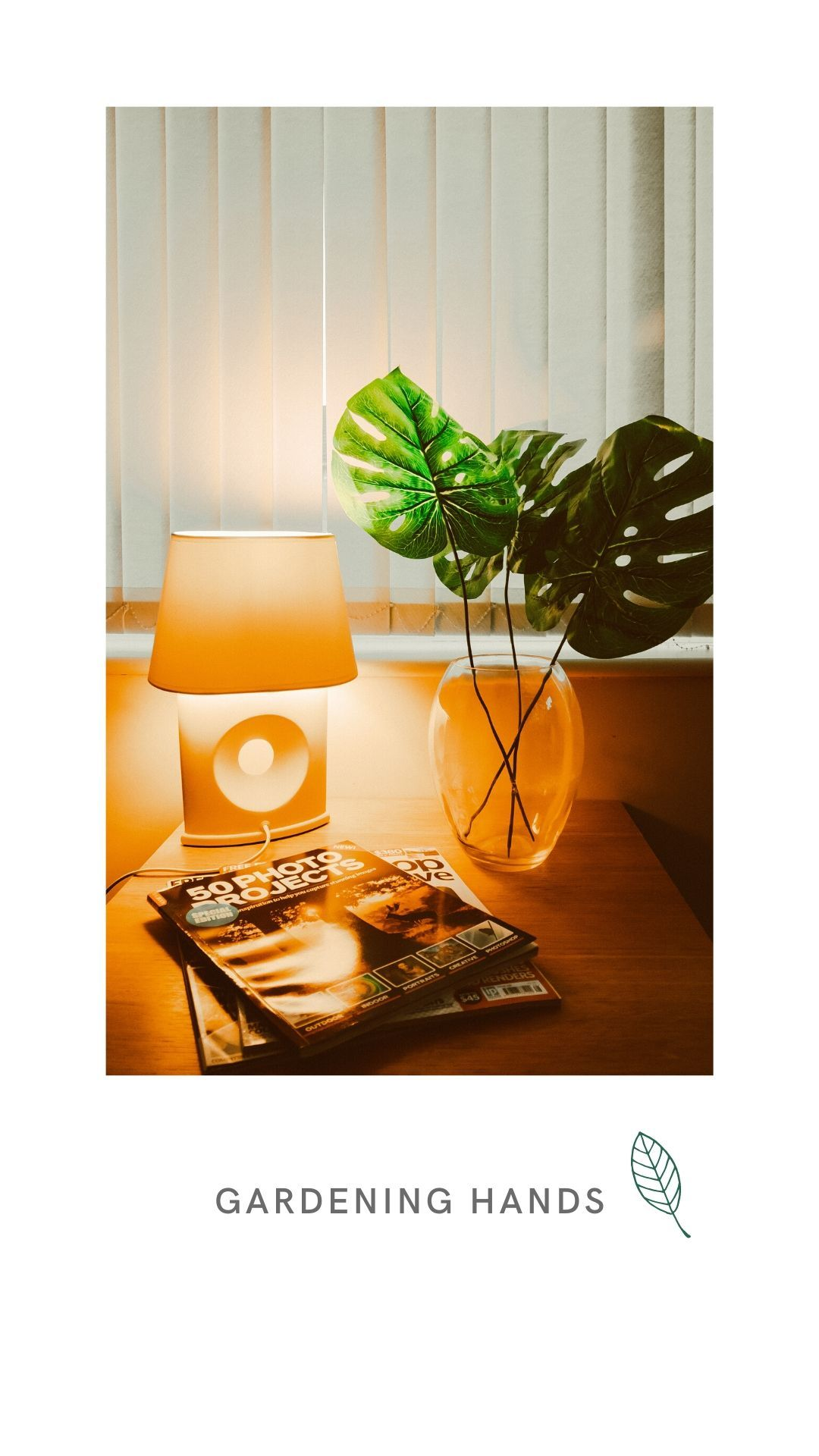 monstera leaves look beautiful and grow beautifully indoors. To know more about houseplants visit the link #houseplants #indoorgarden #homegarden #monstera #leaves