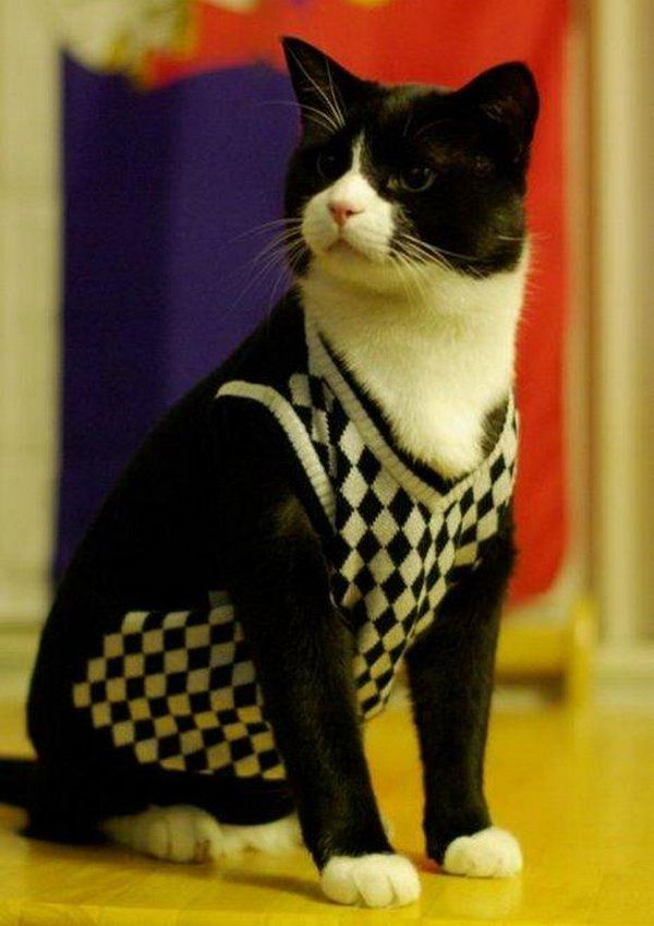 clothing for cats, pets, outfit, vest