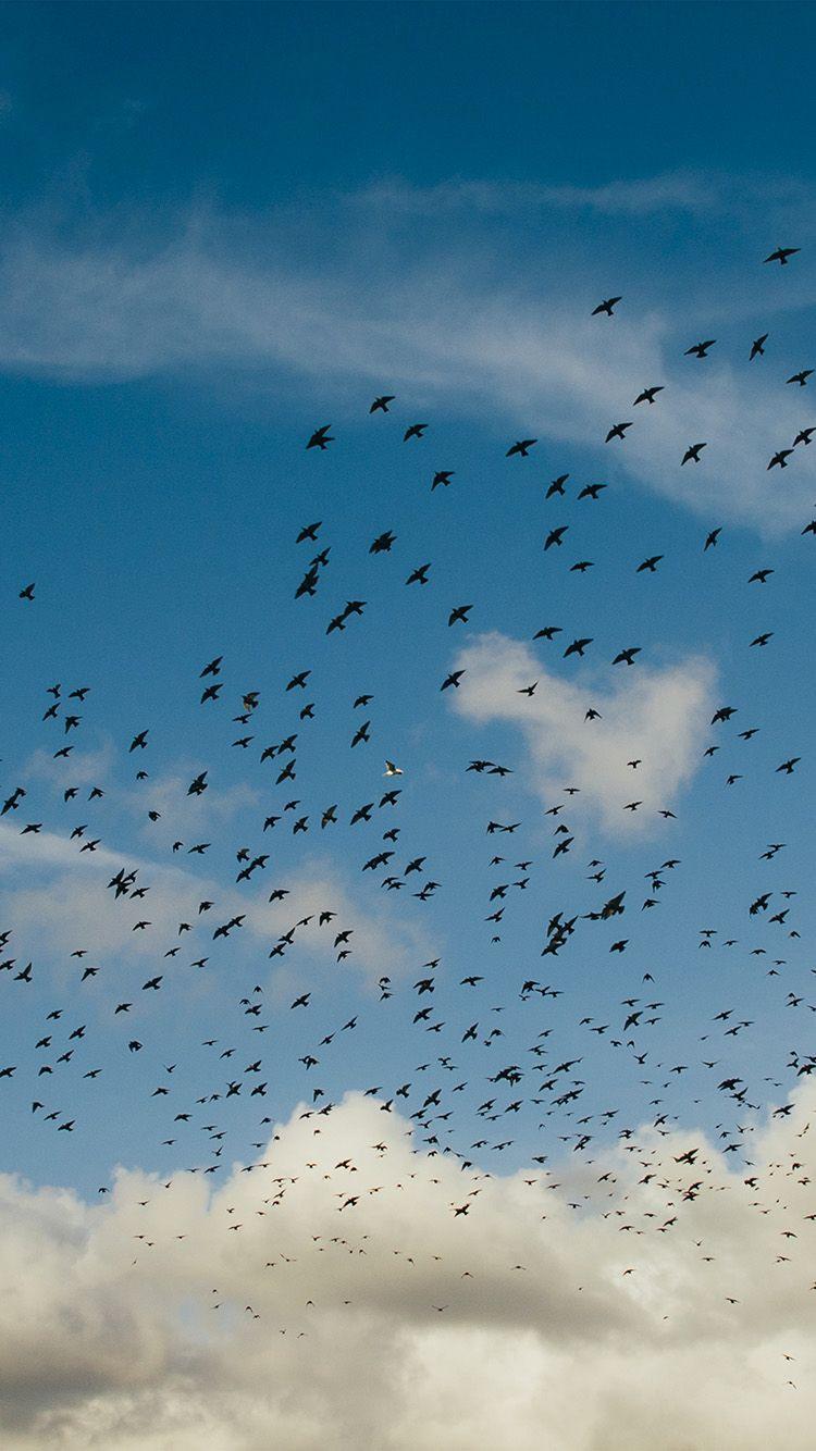 Birds Sky Animal Fly Blue Cloud Nature Wallpaper Hd Iphone Iphone Wallpaper Sky Clouds Blue Clouds