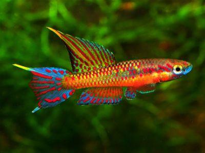Pin de clara addiego en colores acuario y agua for Peces de colores para acuarios