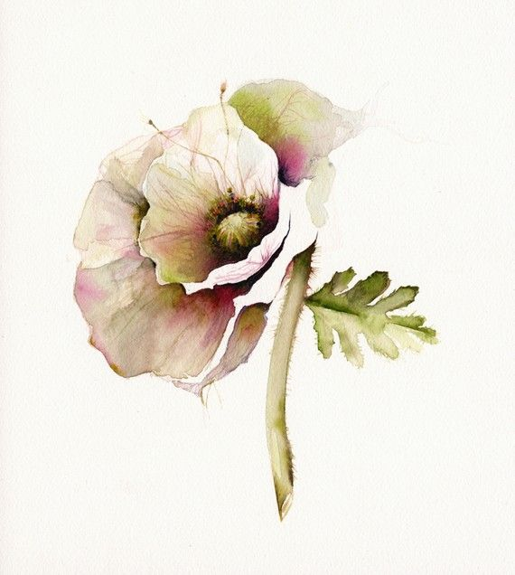 poppy art, floral, french country, nature, cream, minimalist, flower, cottage decor-Poppy Art- Archival print of watercolor- bontanical art. $20.00, via Etsy.