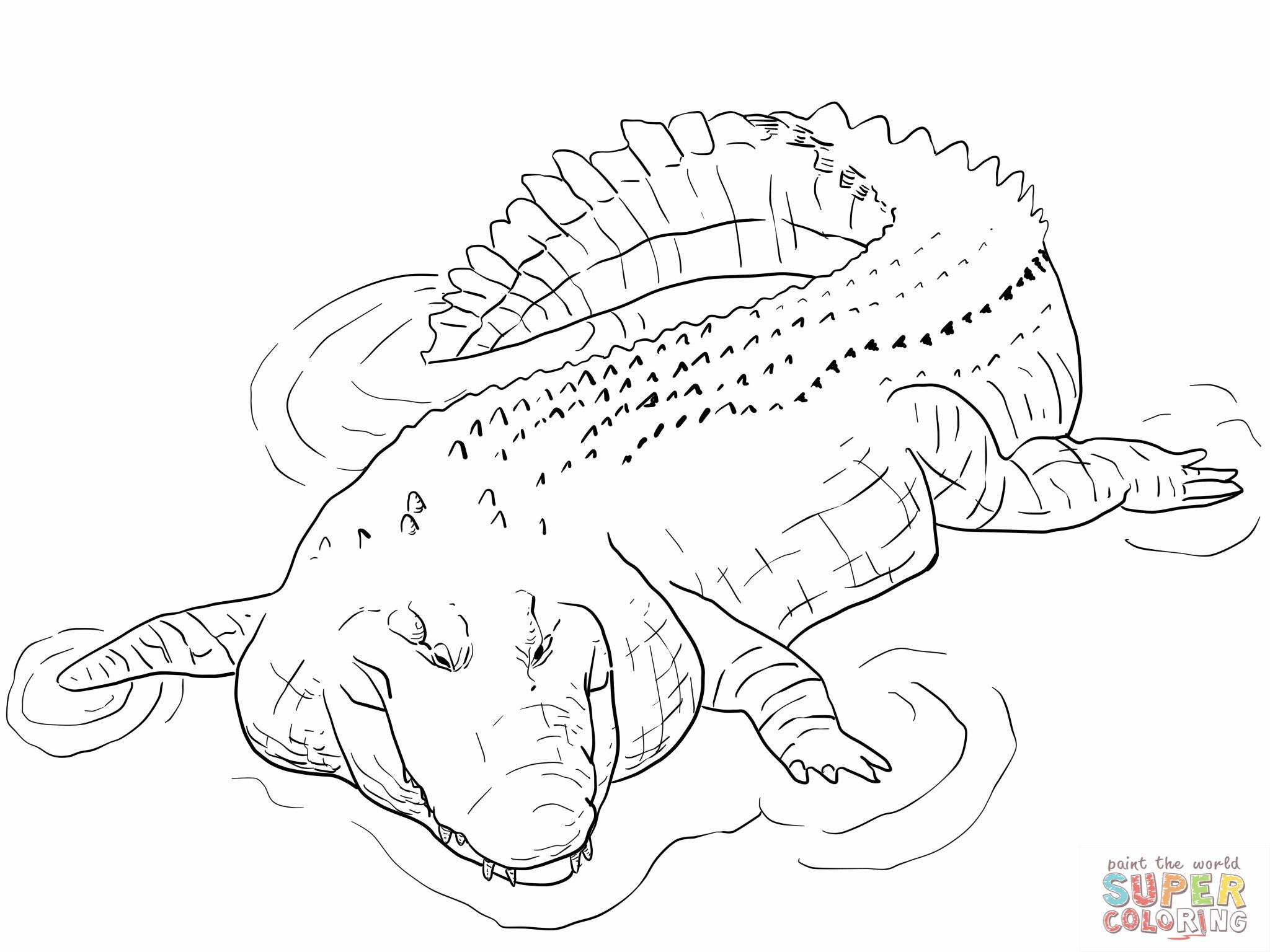 Free coloring pages alligator - Indo Pacific Saltwater Crocodile Coloring Page Alligator Coloring