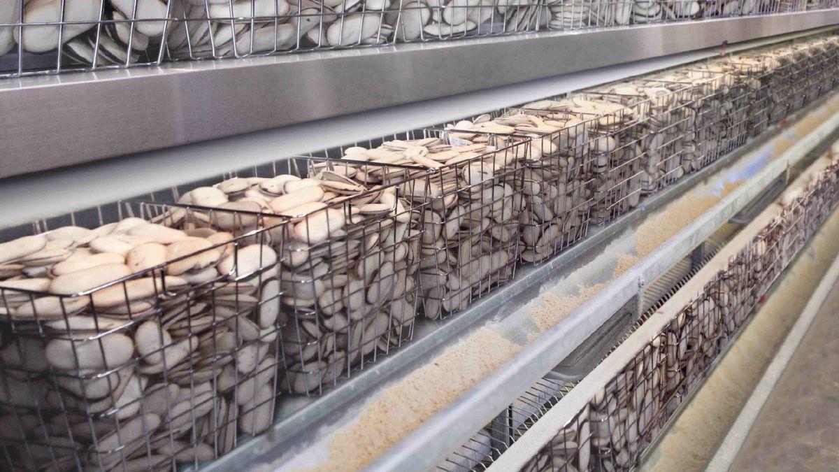 Pepperidge Factory Farm Under Fire For Inhumane Treatment Of Milanos
