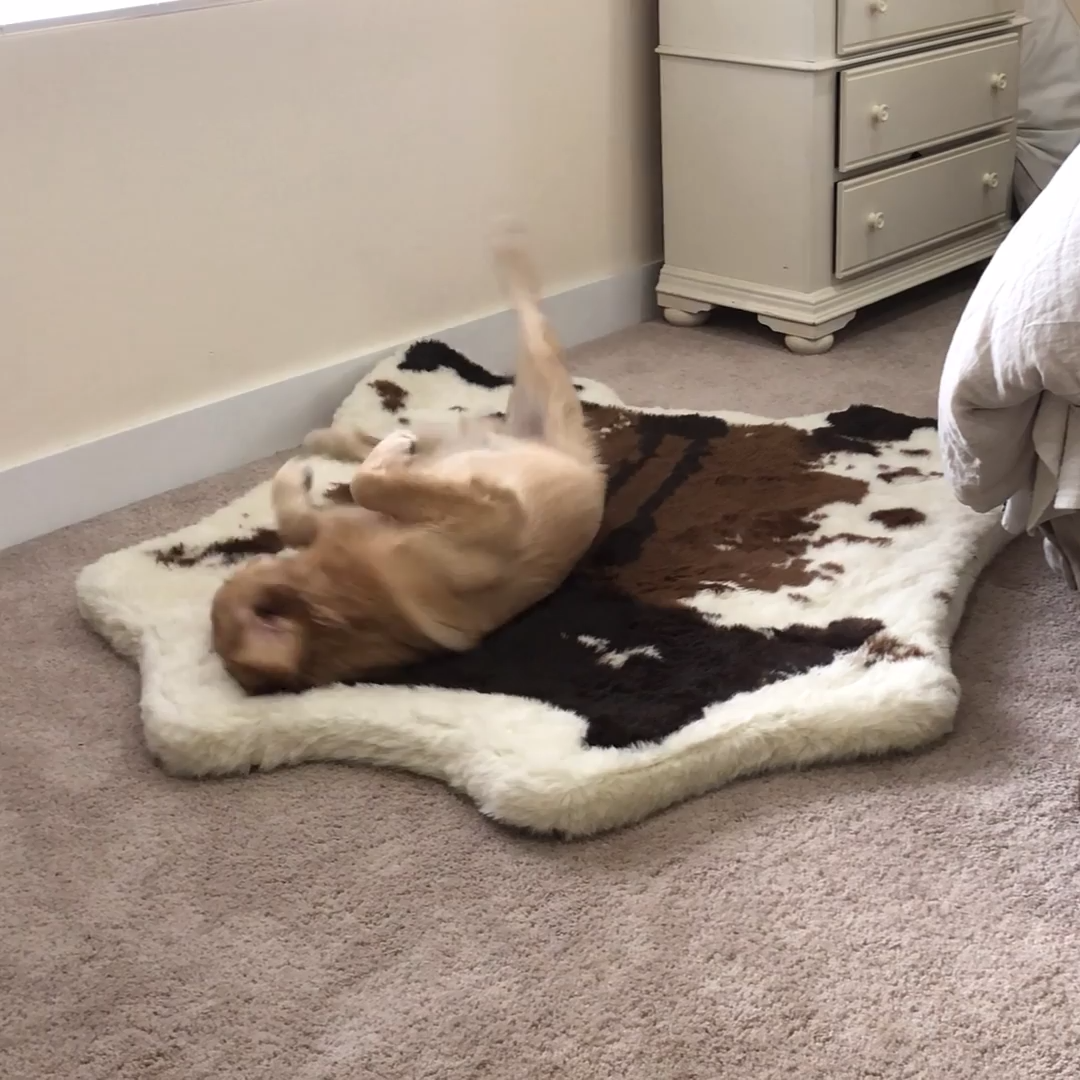 Introducing the PupRug™ Faux Cowhide memory foam dog bed
