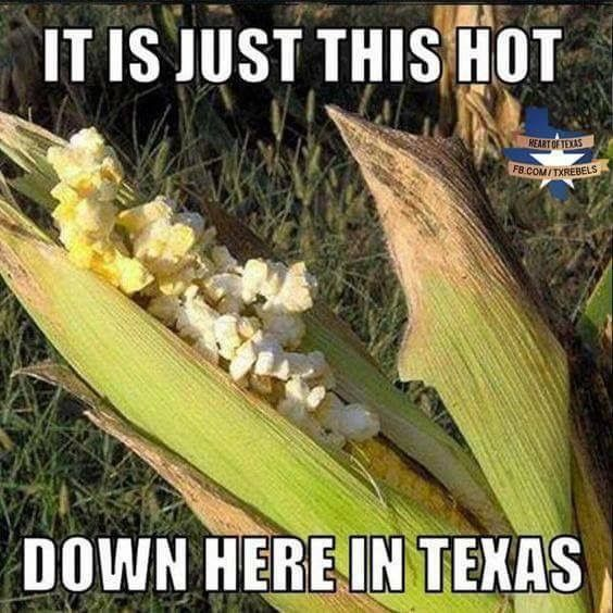 It Is Just This Hot Down Here In Texas Corn Stupid Funny Memes