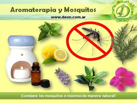 Como Combatir Los Mosquitos Con Aromaterapia Aromaterapia Plantas Aromaticas Y Medicinales Y Mosquitos