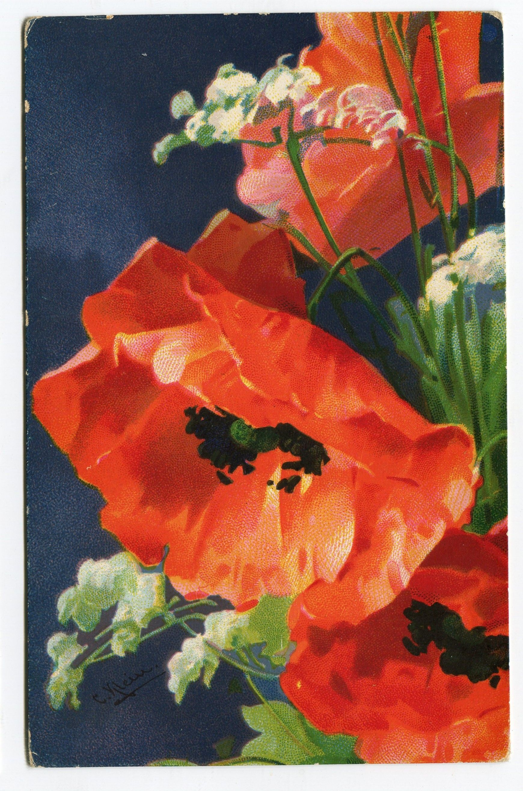 Catharina C Klein Vintage Postcard From Germany Poppy Flowers