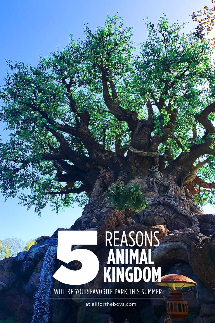 Why Animal Kingdom Should Be Your New Favorite Park At