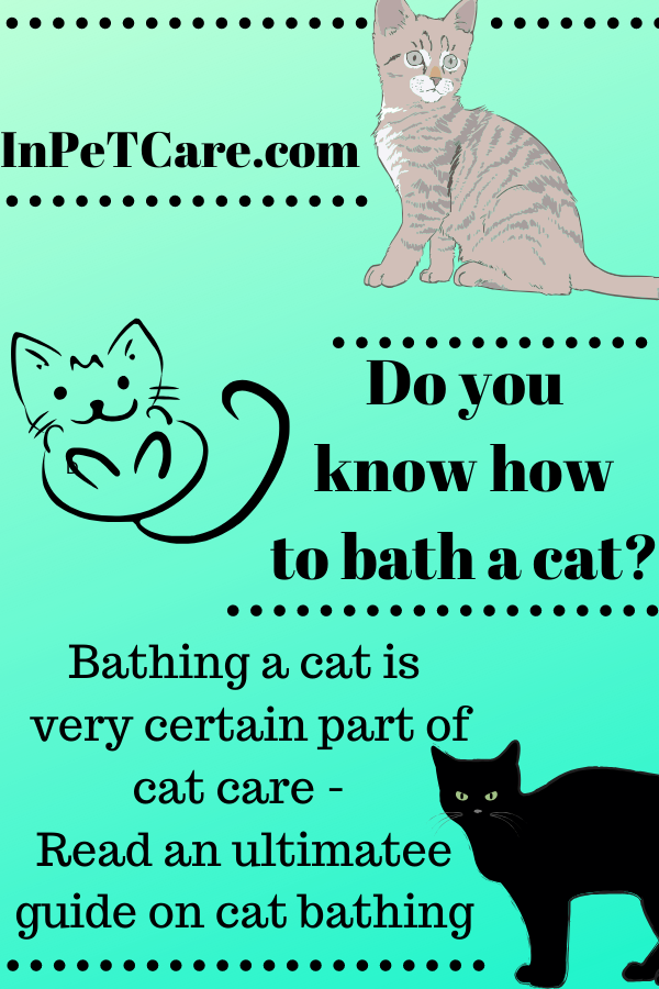 How To Bathe Your Cat Plus How Often You Need To Do It In 2020 Siberian Cat Fleas On Kittens Cats