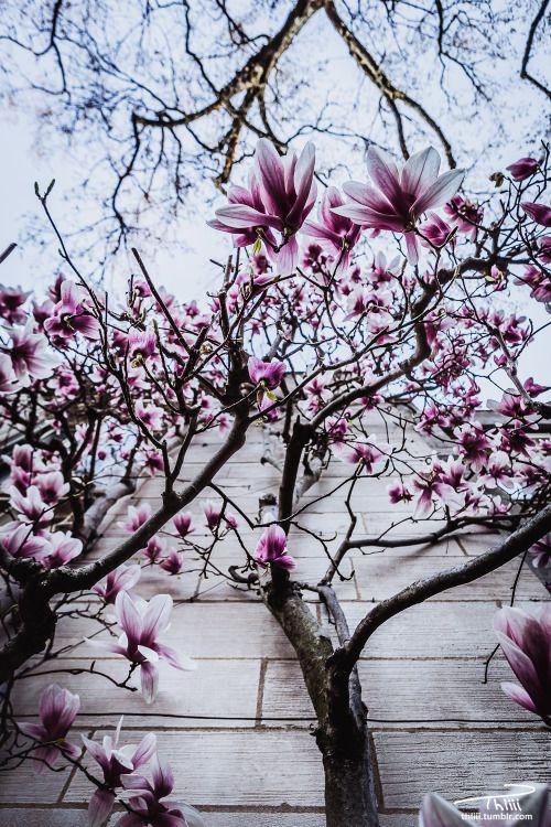 "thliii: "" 3.28.16 Princeton University @drxgonfly Theodore H Lewis III | iStockPhoto | 500px | Instagram """