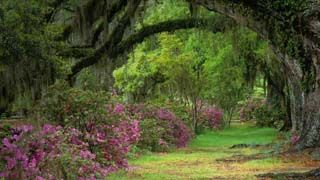 e551b0a974a53ad06e00331c9a76ba2f - Magnolia Plantation & Gardens 3550 Ashley River Road Charleston Sc