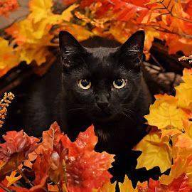 A Love Letter To Autumn And Black Cats Catsaesthetic Cats Crazy Cats Black Cat Aesthetic