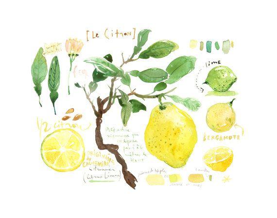 Zitrone Print Kuche Kunst Zitrone Baum Aquarell Von Lucileskitchen