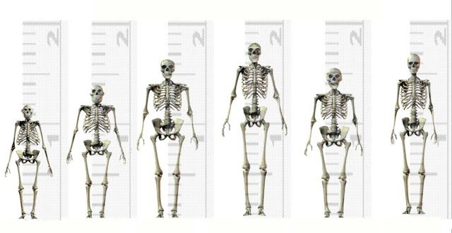 according to this short video, they concur that homo, Skeleton