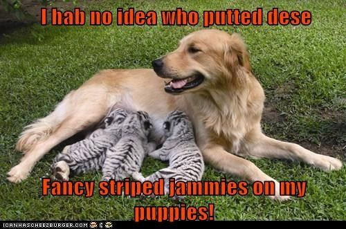 And Who Gave Them Such Sharp Claws Funny Animals Unusual