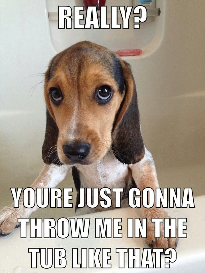 If You Re A Beagle Parent You Re Going To Relate To These 8 Cute