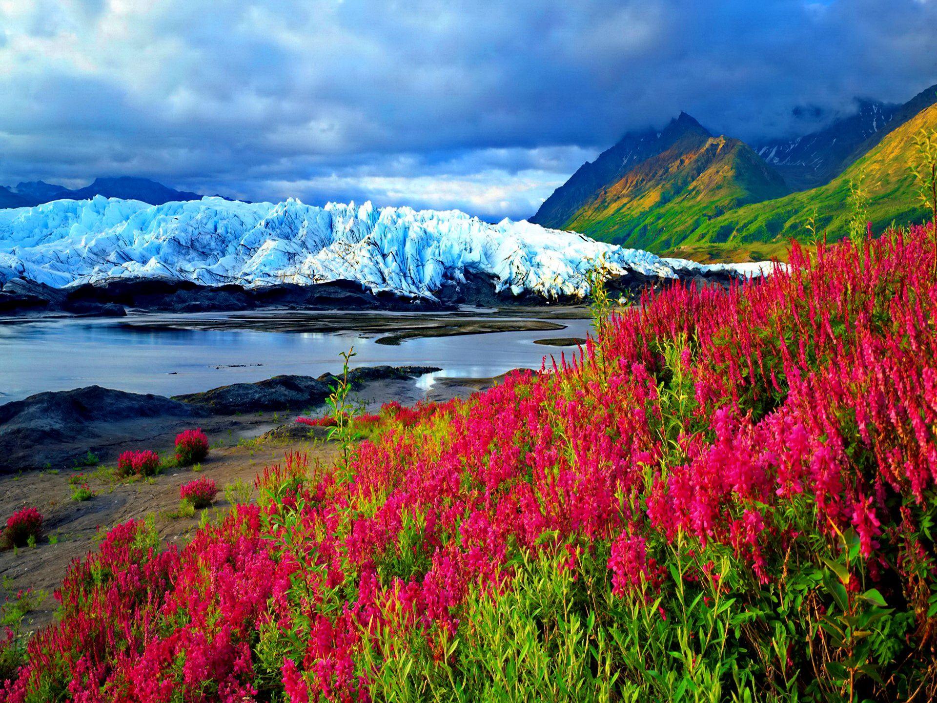 Картинки горы цветы вода снег красивые