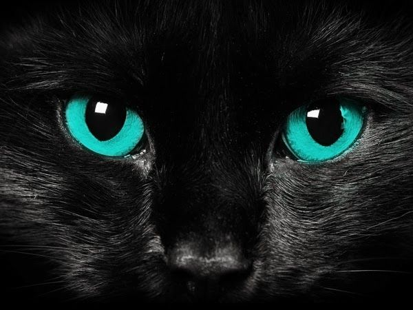 5 Cats with stunning eyes, they look like a shining stone :)