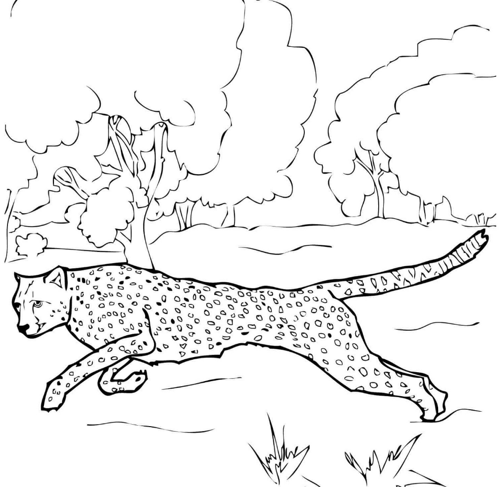 Cheetah Coloring Pages | Coloring pages to print, Coloring ...