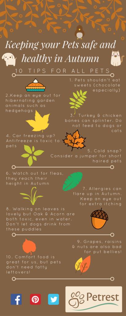 Autumn Pet Tips Petrest Pet hacks, Pets, Pet health