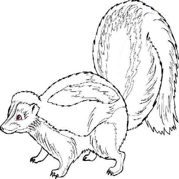 cartoon skunks | Skunk Coloring Pages - striped skunk coloring page ...