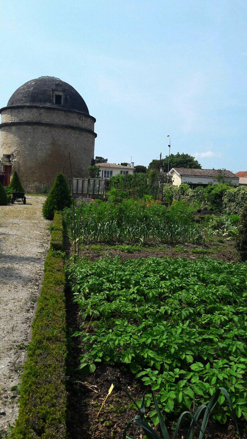 Planter Une Bordure De Buis Épinglé sur jardin & potager