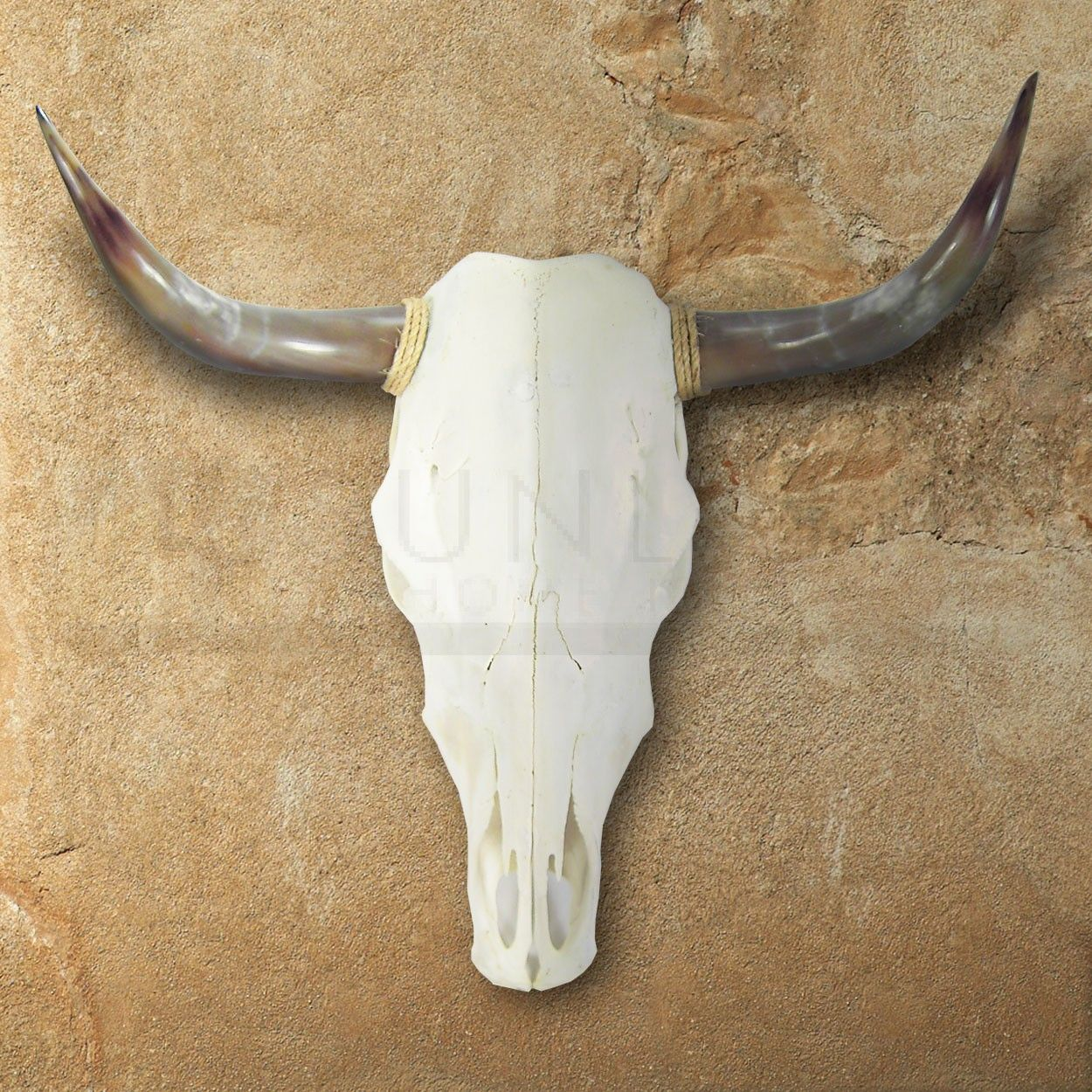 Sunland home decor steer skull with polished horns also in mounted the cowhide store rh pinterest