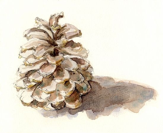 Watercolor pine cones google search watercolors for How to paint pine cones for christmas