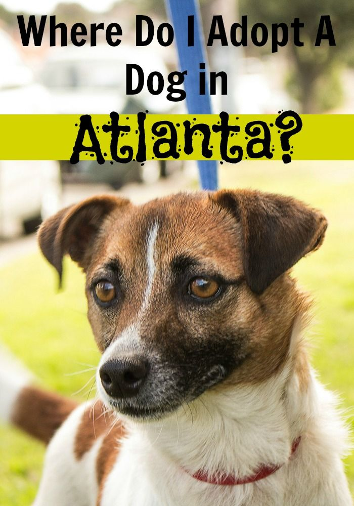 Where Do I Adopt A Dog in Atlanta? Dog training tips