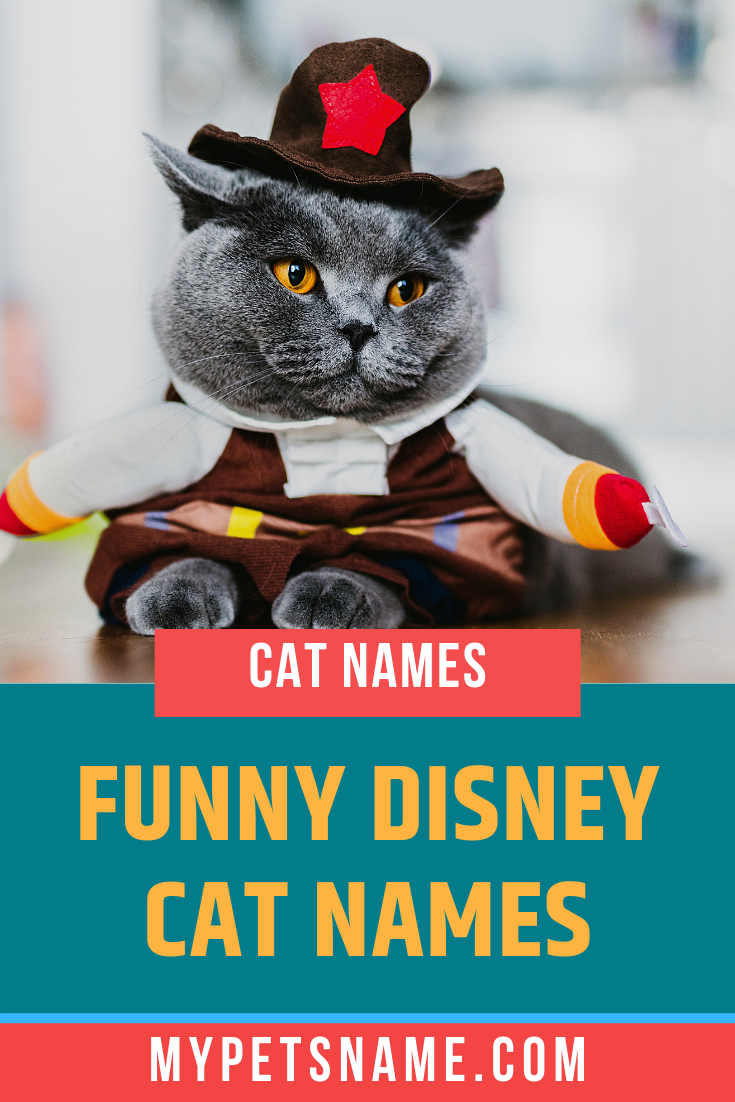 Funny Disney Cat Names Disney Cat Names Cat Names Disney Cats