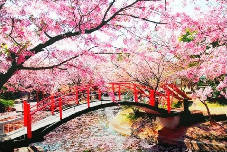 Viewing Japan S Cherry Trees In Bloom An Otherworldly Experiance Cherry Blossom Japan Japanese Garden Cherry Tree