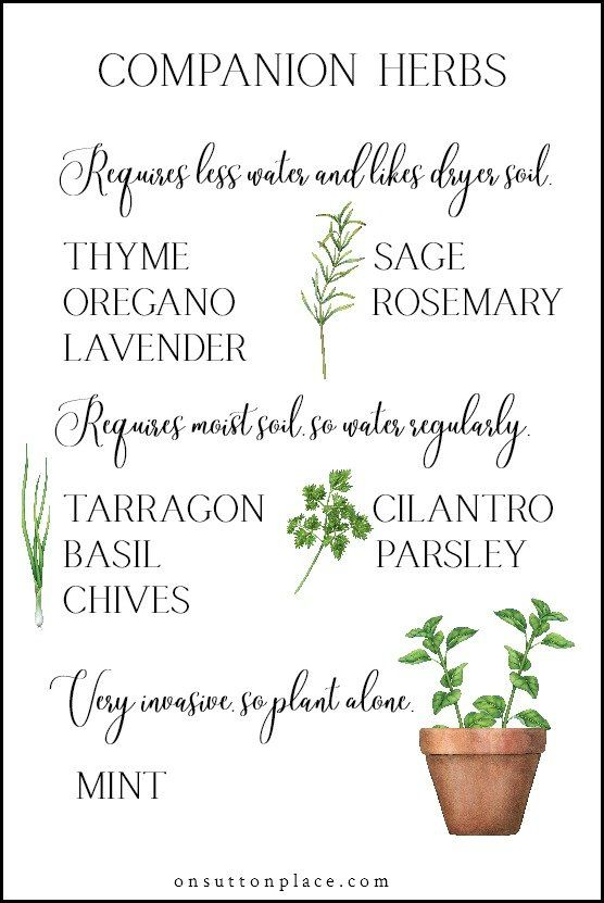 Photo of 5 Tips for Growing Herbs in Containers