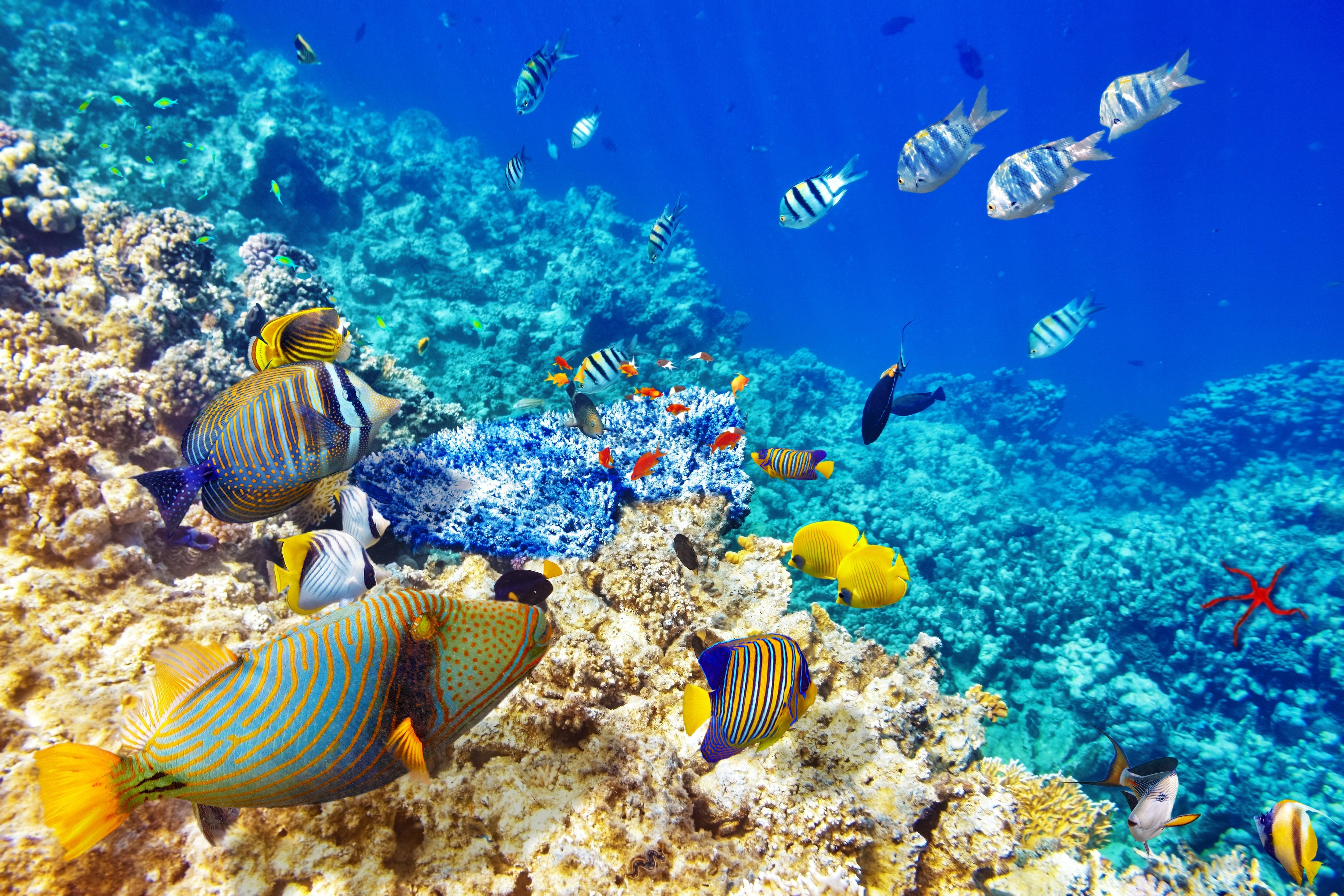 Underwater World Ocean Fish Coral Reef Images 7200x4800 Oceans Of The World Underwater World Ocean Fishing