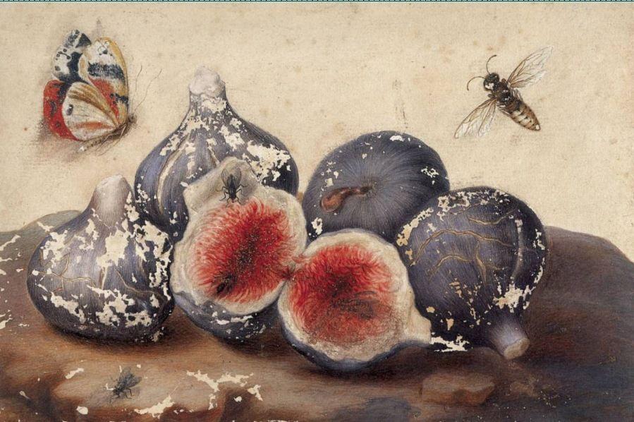 Открытки летним, инжир с жуком картинки