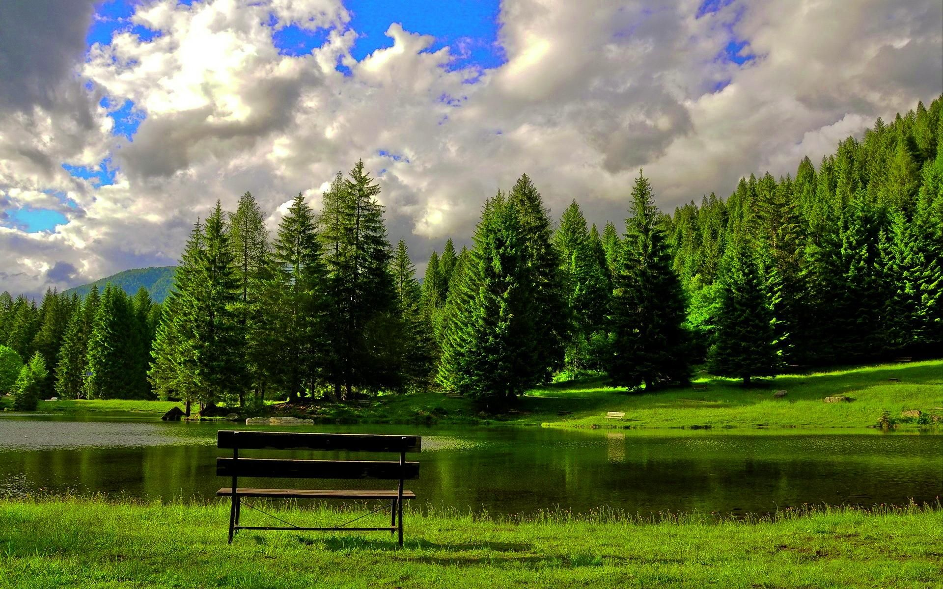 Красивый пейзаж леса картинки