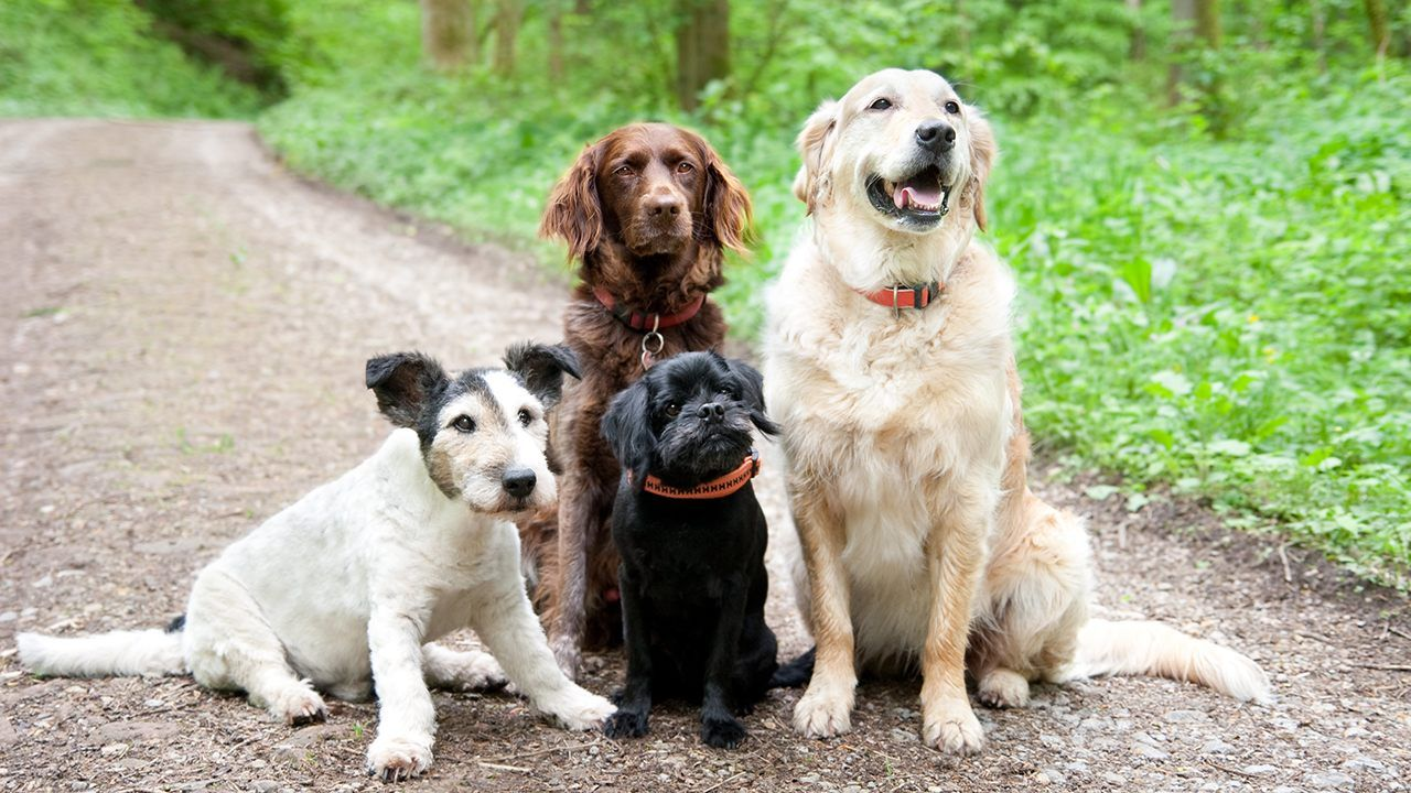 Dogs Personalities Can Change To Be Like Their Owners Michigan Researchers Find Dogs Two Story Windows Puppy Stages
