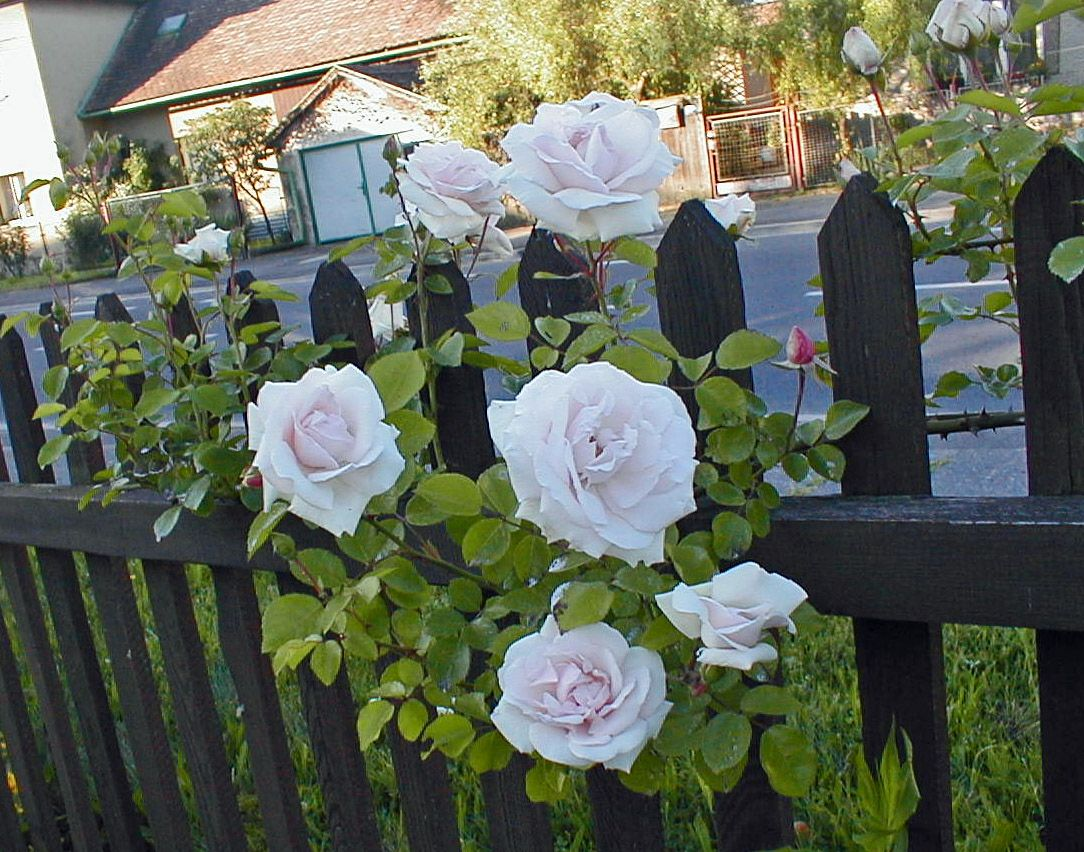 picket fence and flowers painting Google Search