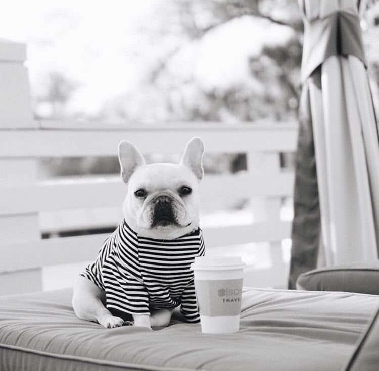 What more would you need in the morning; sun, #coffee and a #Frenchie to keep you company. #Bulldogs are the best!